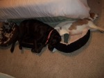 Roxi being a good Friend when Paisley had a broken leg last Christmas